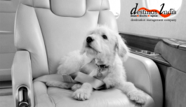 Travelling With Pets By Air In India
