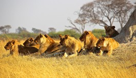 Wild Life in India – I (Wild Life safaris in North India)
