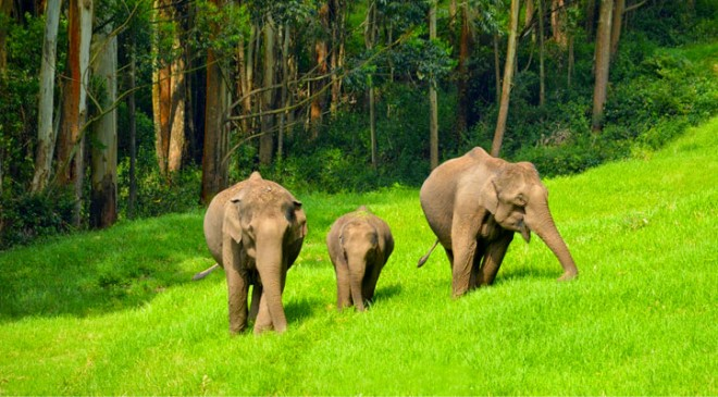 elephant-munnar