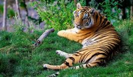 Sariska Tiger Reserve – Famous Tiger Reserve in Rajasthan